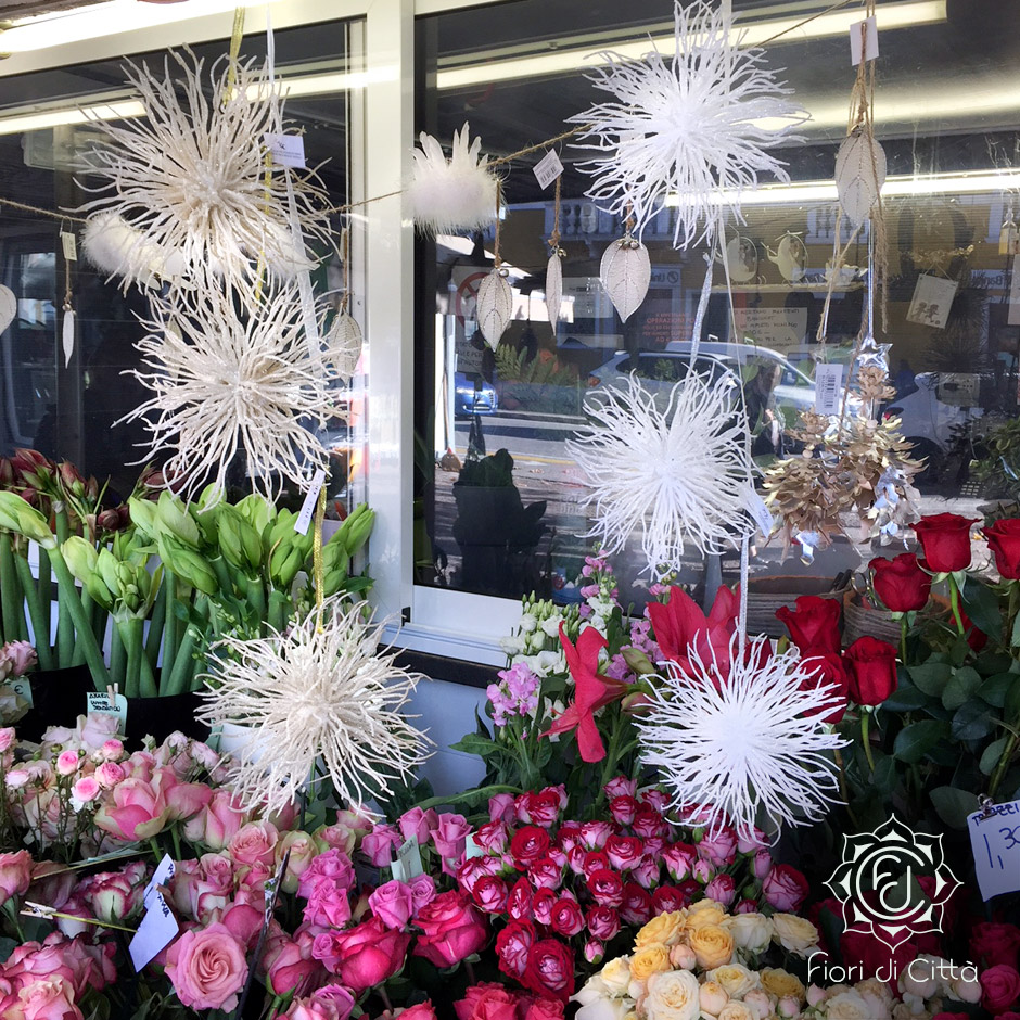fiocchi di neve o anemoni di mare che sembrano danzare al ritmo delle canzoni natalizie.