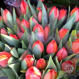 I tulipani, fiori recisi o bulbi: in entrambi i casi, sono un anticipo di primavera