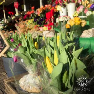 bulbi di tulipani e giacinti per un regalo speciale